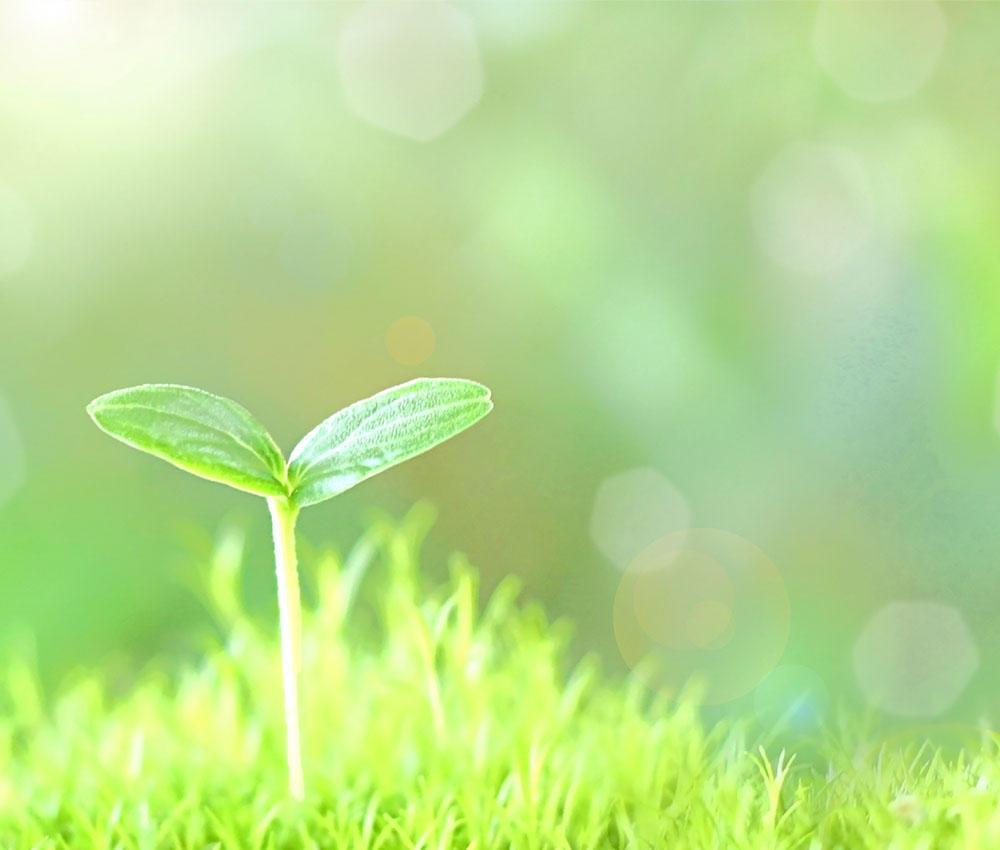 環境分野に対する取り組み